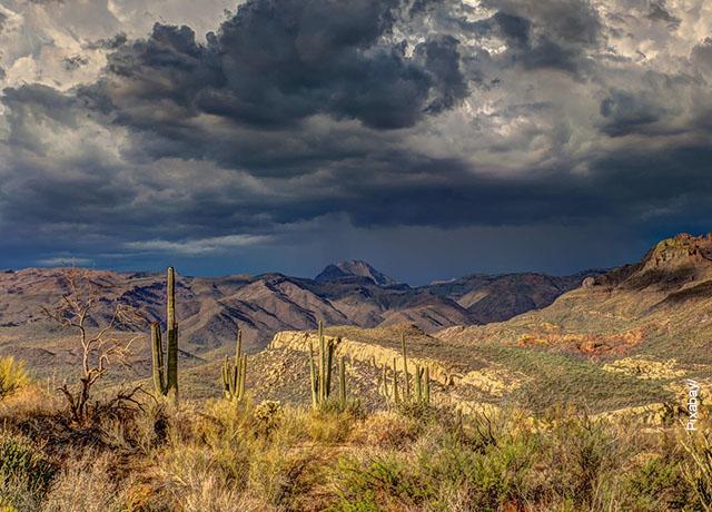 Foto de vegetación y un paisaje desértico