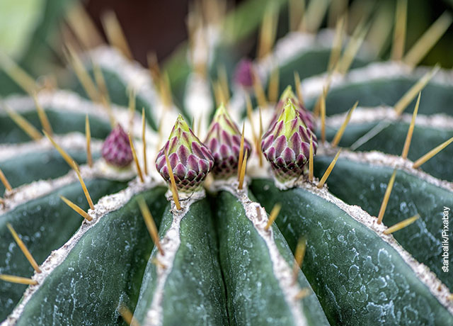 Foto de unas flores sobre la superficie de un cactus