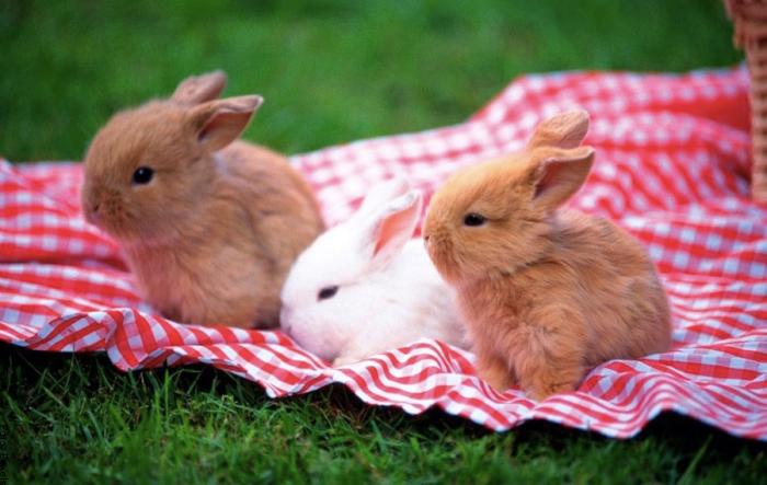 Foto de conejos bebés