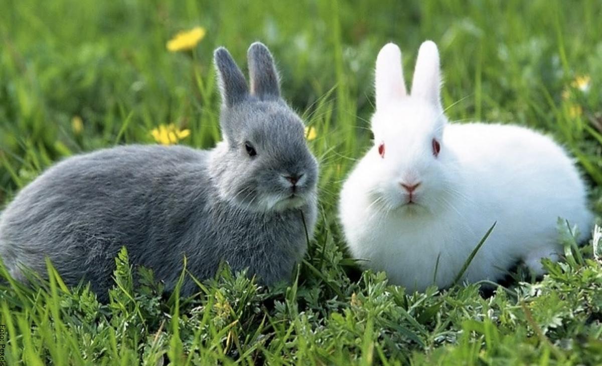 Soñar con conejos, ¡amor y familia a la vista!