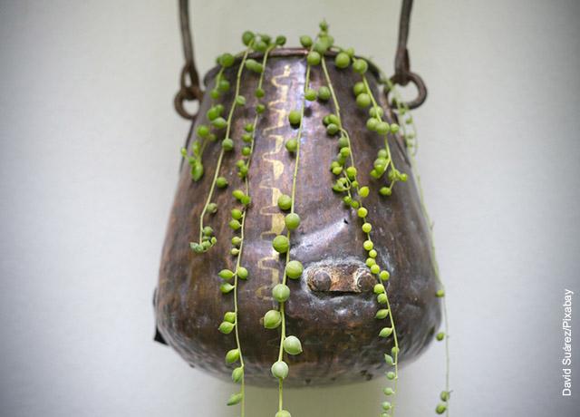 Foto de una maceta colgada, con unas hojas verdes