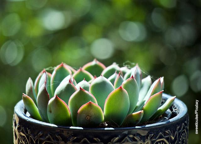 Foto de una planta tipo cactus sembrada en una maceta grande