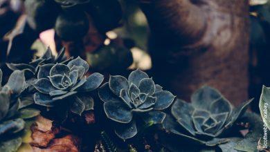Foto de una planta de suculentas colgantes