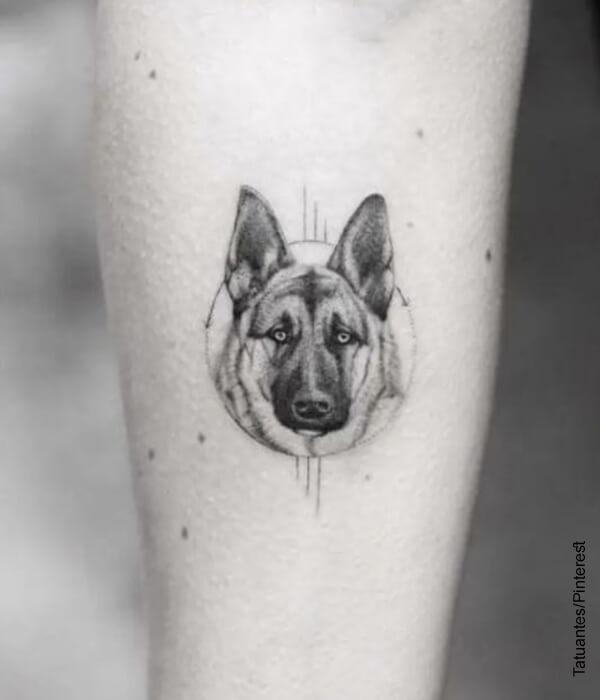 Foto de un pastor alemán tatuado en la piel