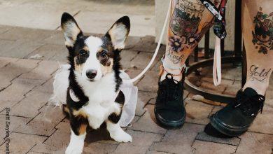 Foto de un perro sentado junto a su dueño que ilustra un tatuaje de perro