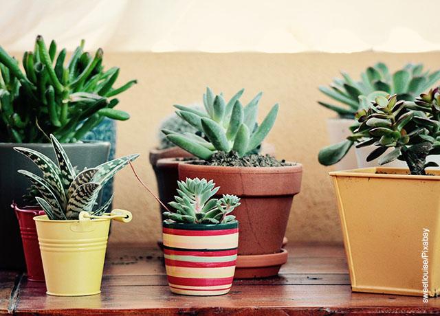Foto de plantas tipo suculentas en macetas