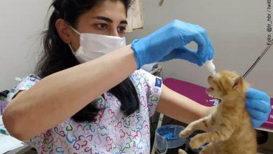 Gata lleva a sus crías de urgencia a una clínica y logra que los salven