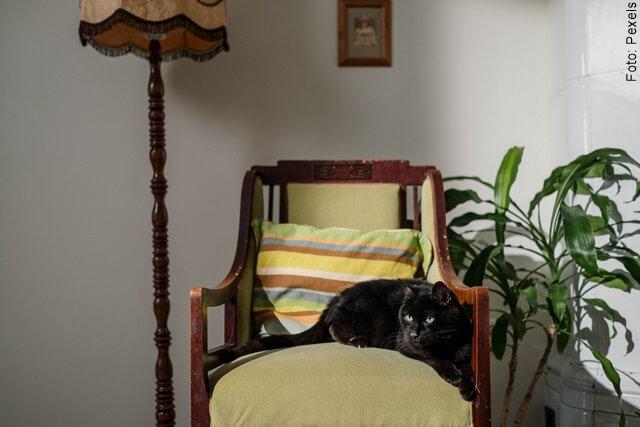 foto de un gato negro en un sofá