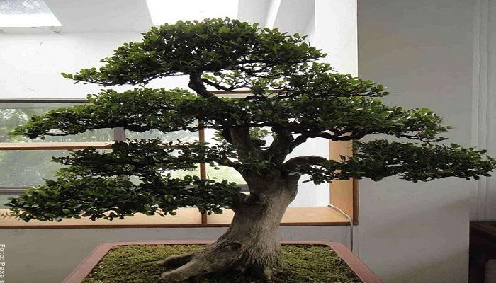 Foto de un bonsai frente a ventana