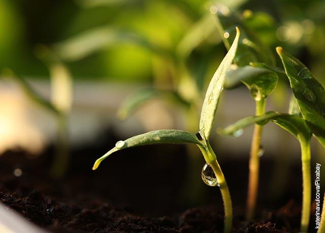 Foto de una pequeña planta creciendo