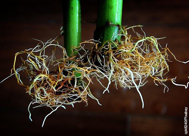 Foto de las raíces de una planta