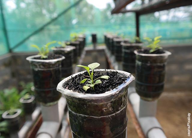 Foto de una planta naciendo en un cultivo