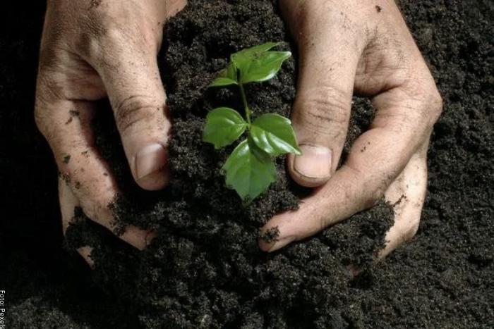 Foto de una persona con las manos en la tierra