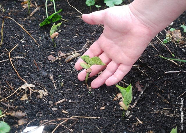 Foto de una persona tocando la tierra de una planta