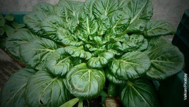 Foto de una maceta con hortalizas que muestra cómo sembrar espinaca