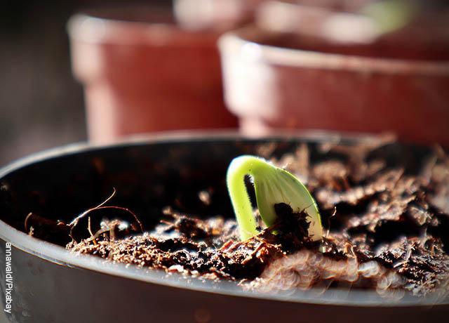 Foto de una planta germinando