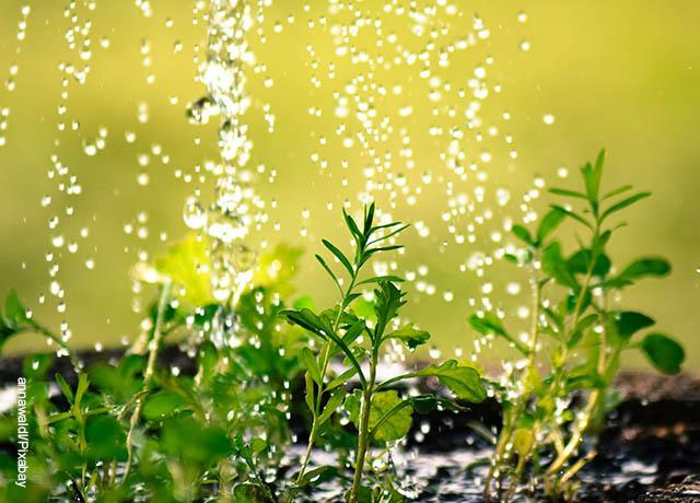 Foto de gotas de agua cayendo sobre plantas