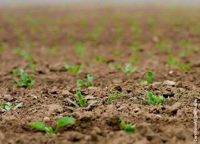 Foto de plantas naciendo de la tierra