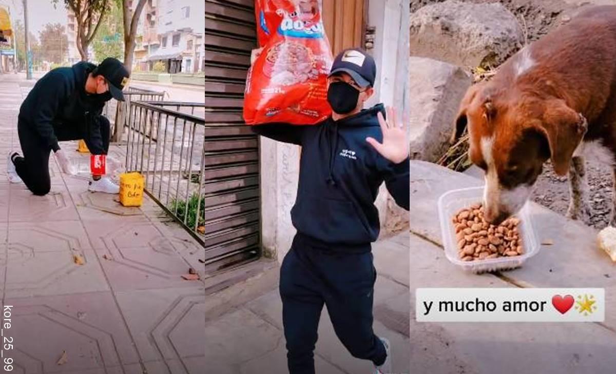 Joven da comida y agua a perros callejeros y en TikTok lo aman