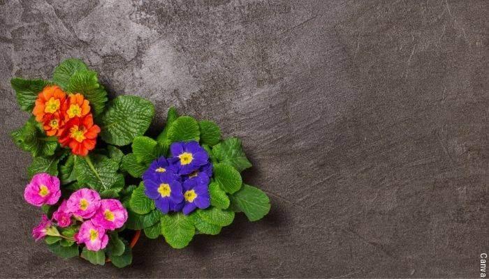 Foto de flores sobre cemento