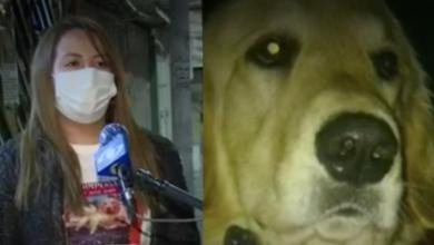 Mujer dejó su trabajo en Chile para buscar a su perro en Colombia