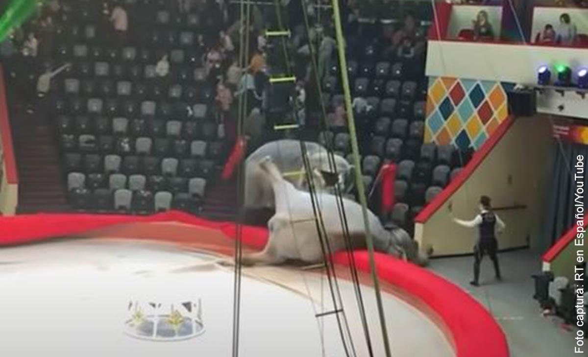 Pelea de elefantes en un circo generó el pánico entre los asistentes