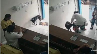 Perrito callejero con la pata herida pidió ayuda en una veterinaria