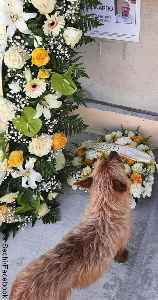 Foto de perro en un cementerio