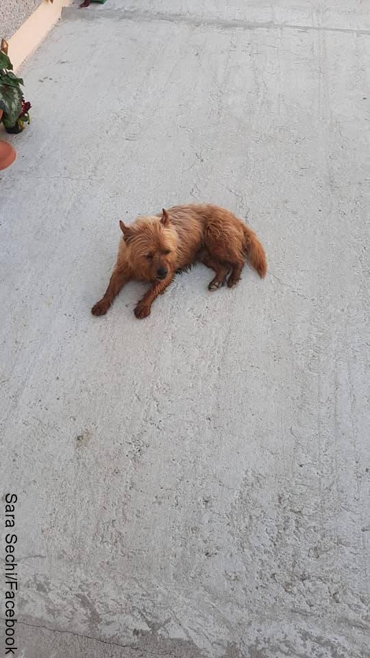 Foto de un perro café