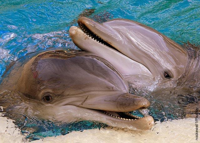 Foto de dos delfines sonriendo