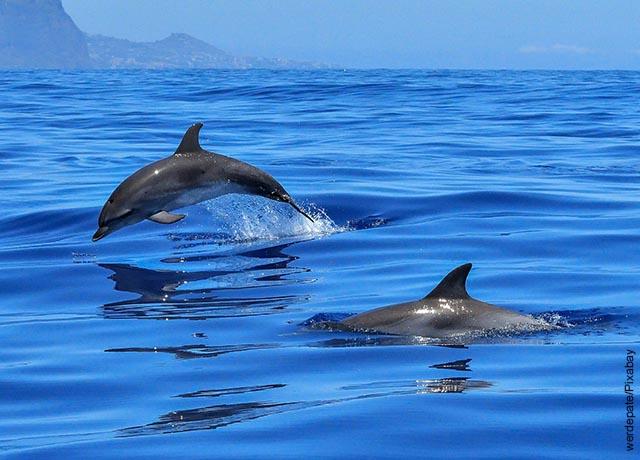 Foto de dos delfines nadando