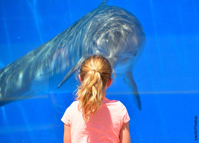 Foto de una niña parada frente a un acuario gigante