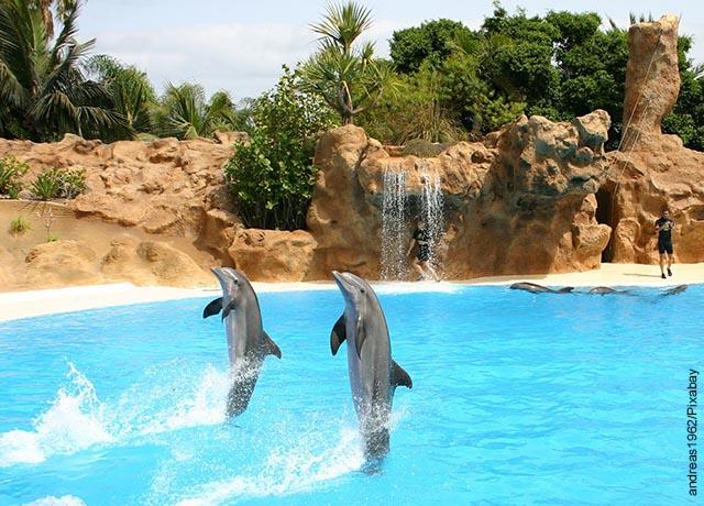 Foto de un show acuático con dos delfines