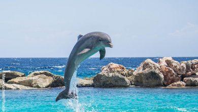 Foto de un delfín saltando en el mar