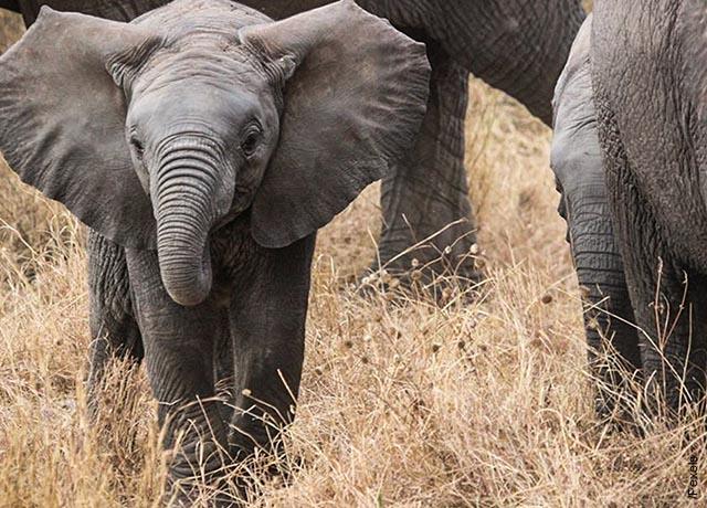Foto de una cría que revela lo que es soñar con elefantes