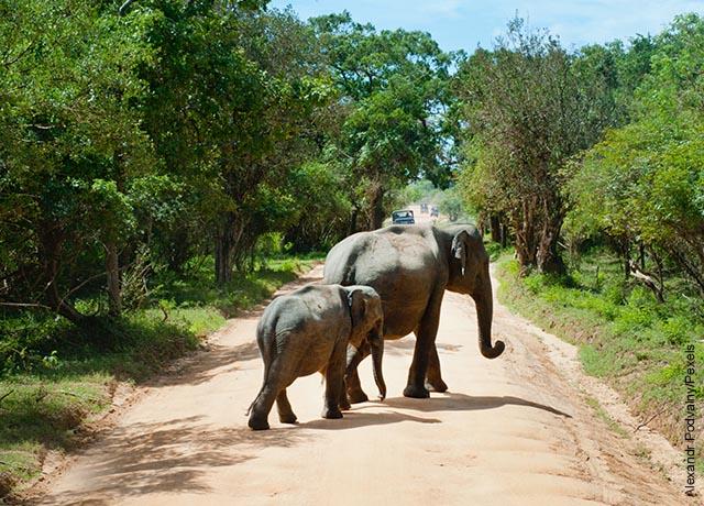 Foto de dos paquidermos caminando por una vía
