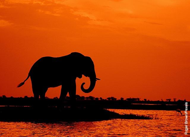 Foto de un elefante tomando agua