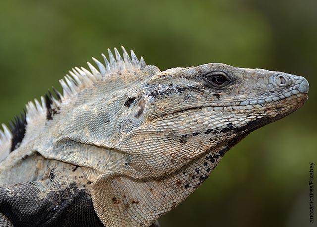 Foto de primer plano de un reptil