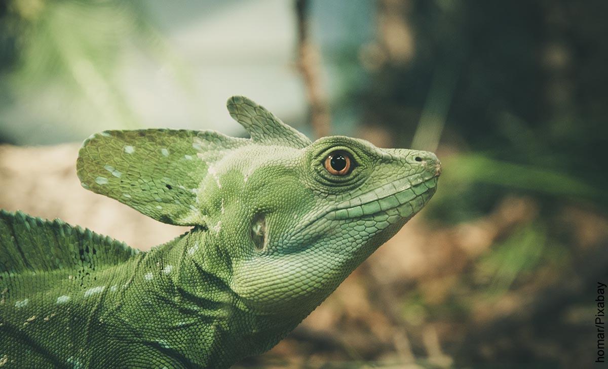 Foto de un reptil verde que representa lo que es soñar con lagartos