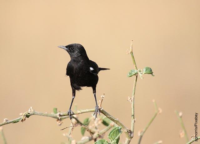 Foto de un pequeño pájaro negro sobre una rama