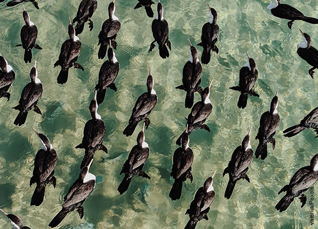 Foto de una manda de aves negras sobre el amor