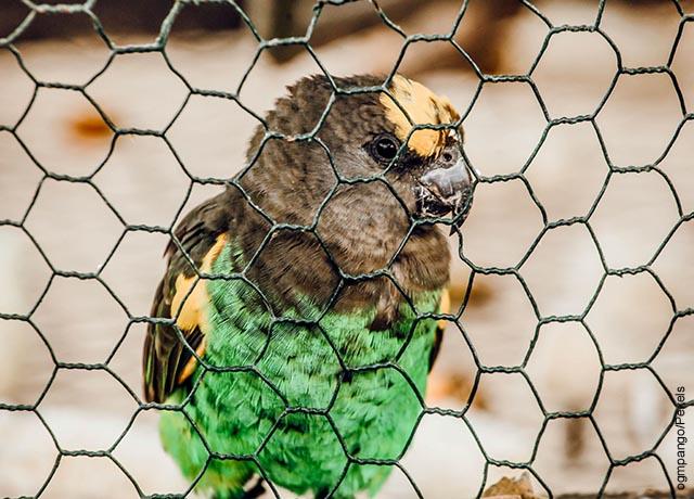 Foto de un pájaro enjaulado
