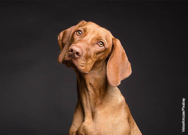 Foto de un canino de color café
