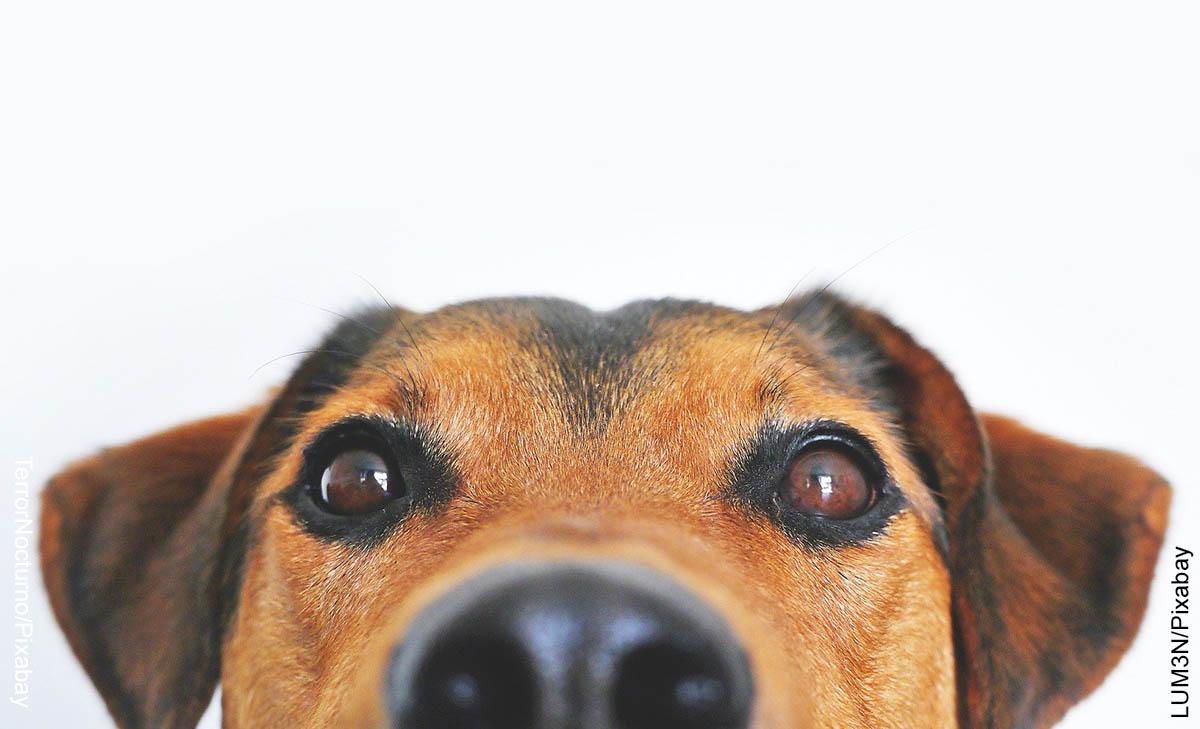 Foto de la nariz de un canino que revela lo que es soñar con perros