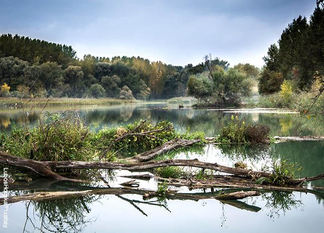 Foto de unos árboles caídos en el agua que ilustran lo que significa soñar con río