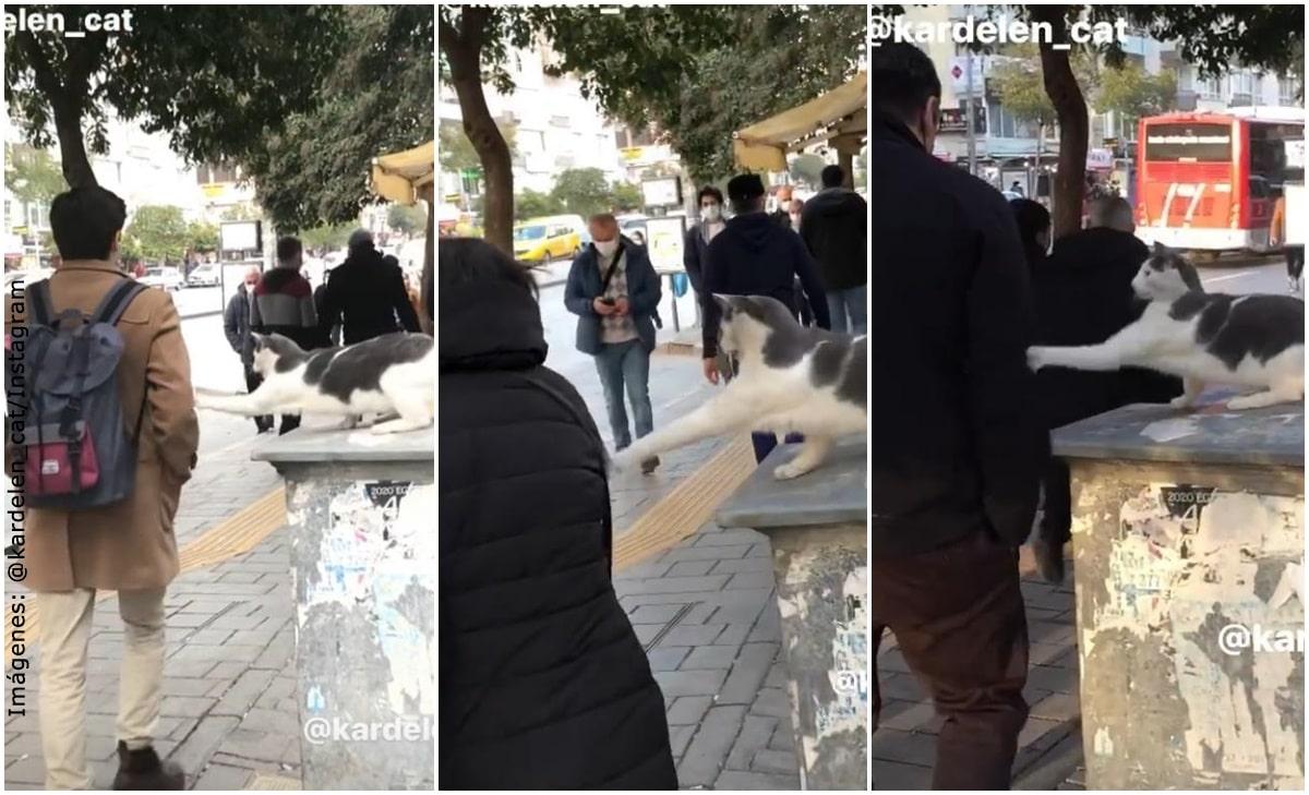 ¡Gato manda zarpazo sin razón a transeúntes y se vuelve viral!