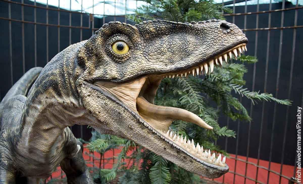 ¿Un bebé dinosaurio pasó por su jardín? Eso afirma una mujer