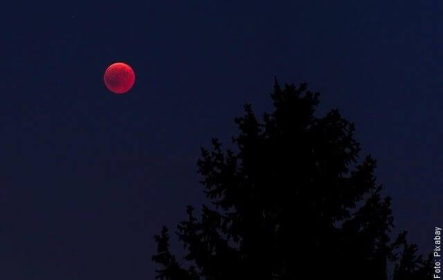 foto de la luna de sangre y un árbol