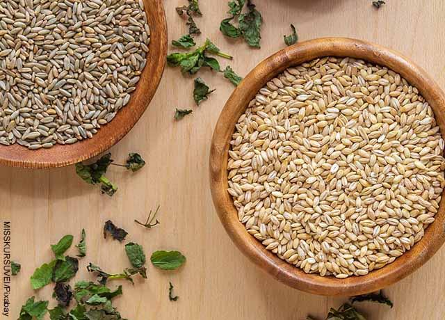 Foto de granos de trigo en vasijas que muestra para qué sirve la cebada
