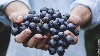Foto de un hombre sosteniendo unas uvas que muestra para qué sirve la uva